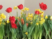 Ottawa spring bulbs and flowers